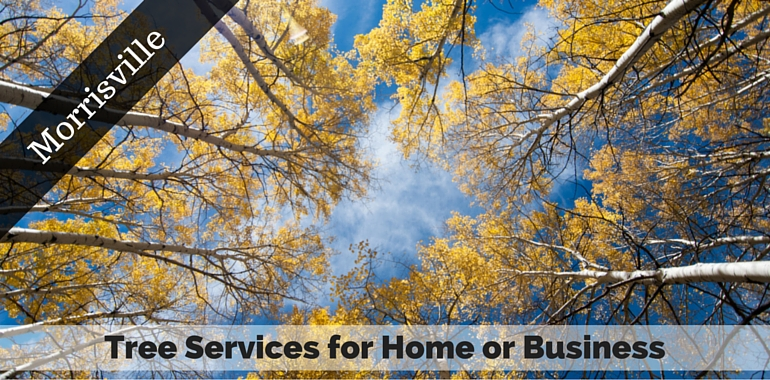Morrisville, PA Tree Services